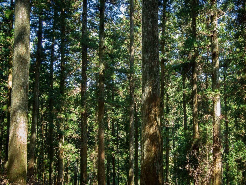 kawamukaiforest2