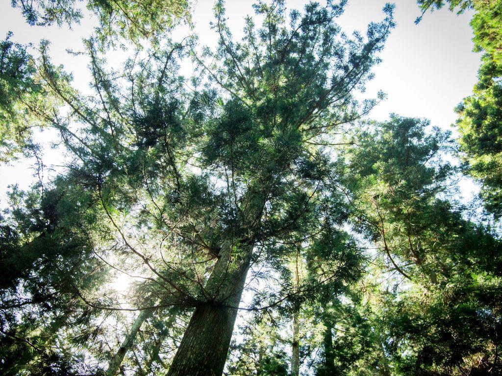 kawamukaiforest3