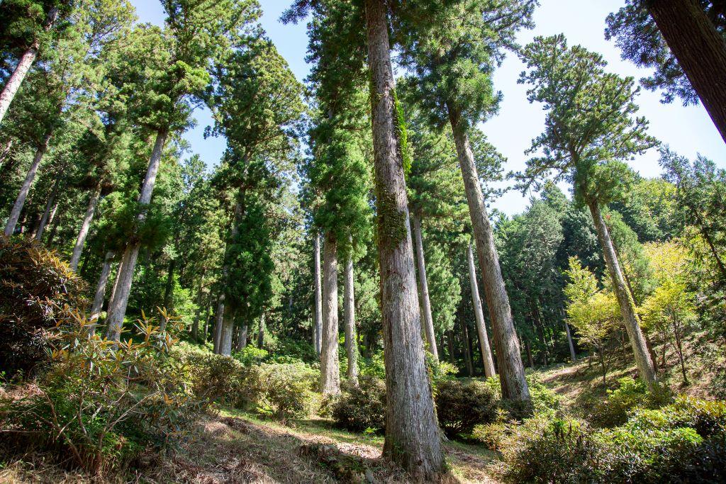 oidaira_forestlight