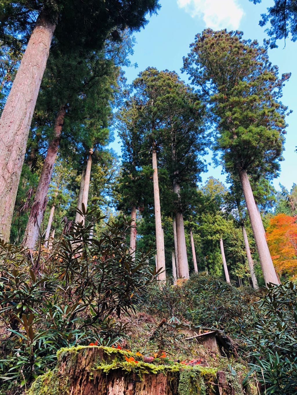 oidairaforest