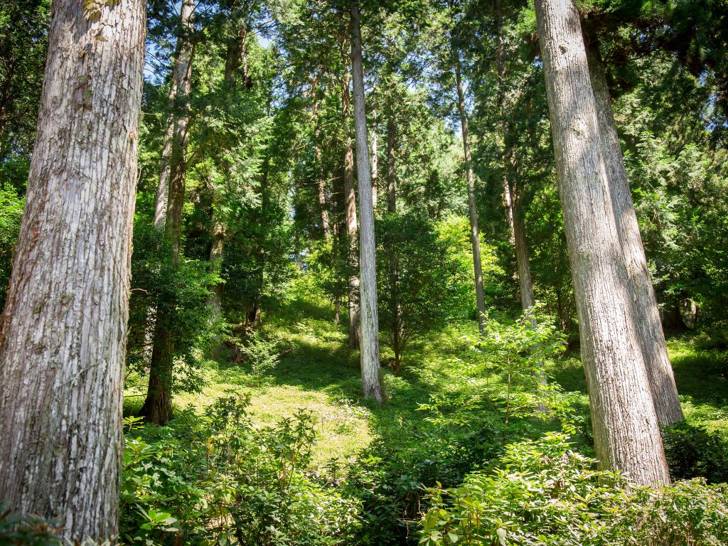 oidairaforest2_wide