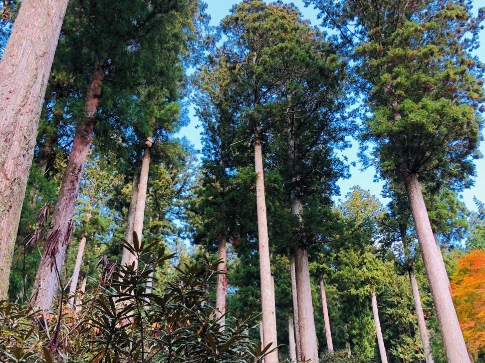 oidairaforest_wide