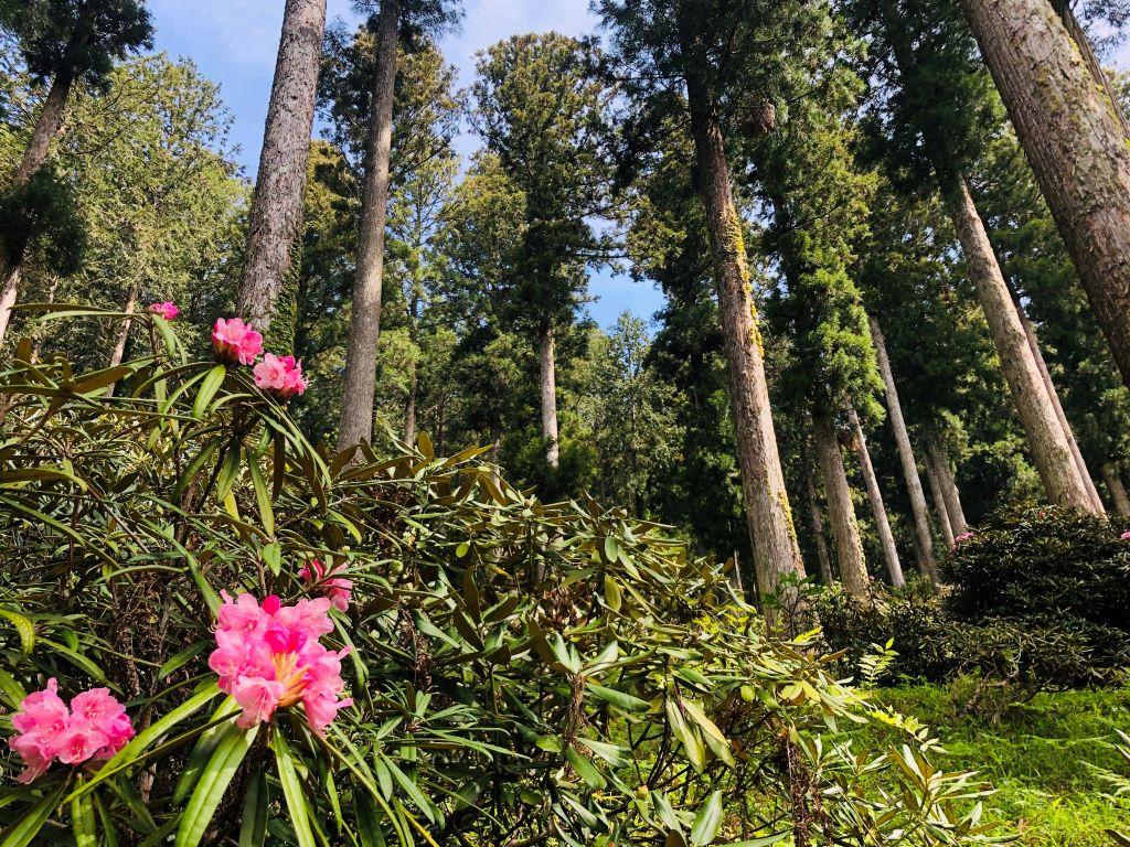 oidara_forest_flower