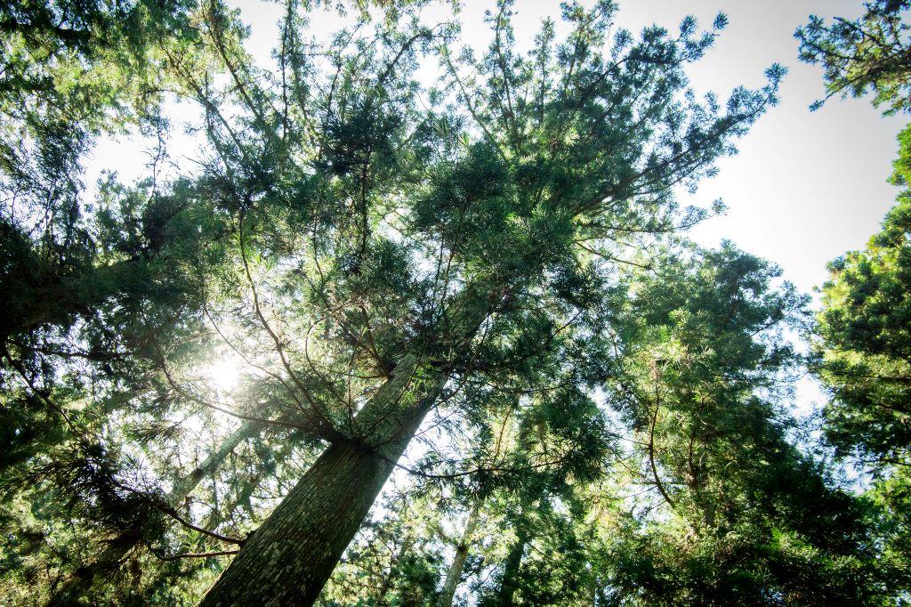 kawamukaiforest4